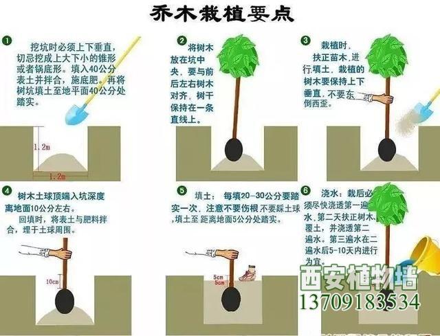 园林植物栽植养护十八问